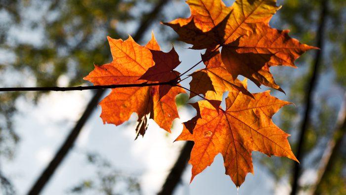 Mēness kalendārs; Šīs nedēļas (23.10. – 29.10.) labvēlīgās dienas!