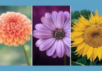 Jūtu tests – izvēlies vienu no ziediem un uzzini par sevi ko interesantu