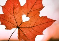 Mīlas virpulī. 3 Zodiaka zīmes, kurām novembris sola pozitīvas pārmaiņas mīlestībā