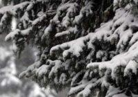 Bricis atklāj, kādi laikapstākļi sagaidāmi Ziemassvētkos
