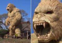 Japānas pilsētiņas iedzīvotāji ir uzcēluši 7 m augstu gorillas statuju no salmiem. Iemesls ir ļoti interesants